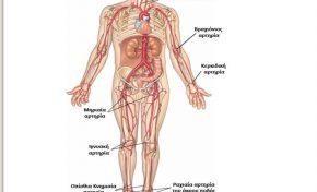 Αρτηριακός σφυγμός: Τι είναι, σημεία λήψης και ποιοι παράγοντες τον επηρεάζουν