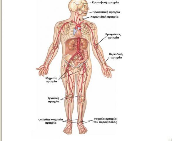 Αρτηριακός σφυγμός: Τι είναι; Σημεία λήψης - Ποιοι παράγοντες τον επηρεάζουν;